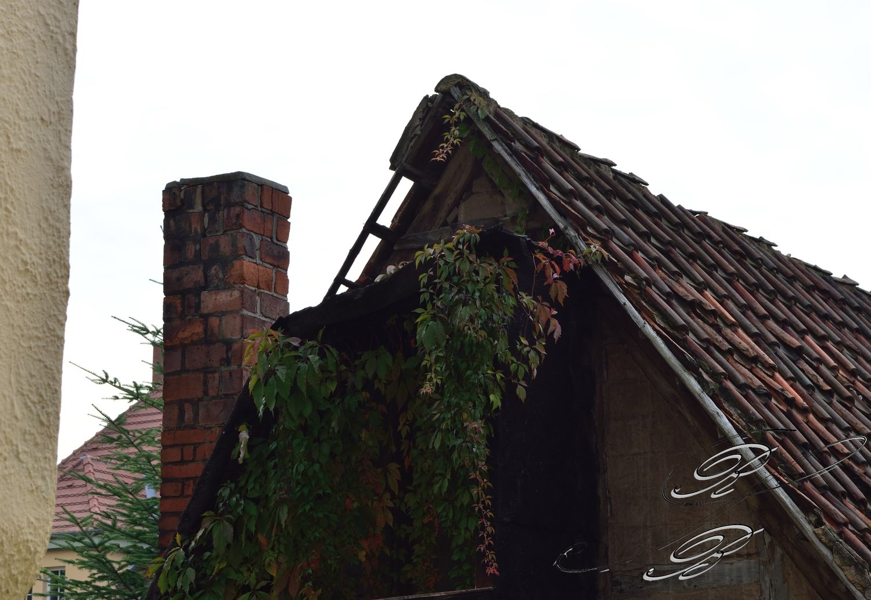 FT_Harz_2016_058