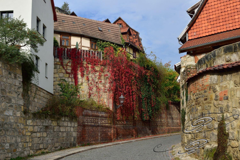 FT_Harz_2016_065
